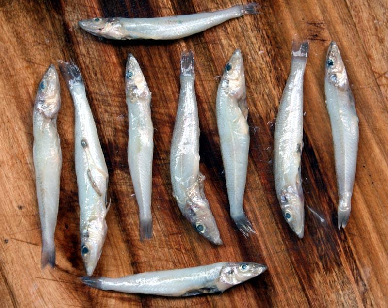 Chinese sardines