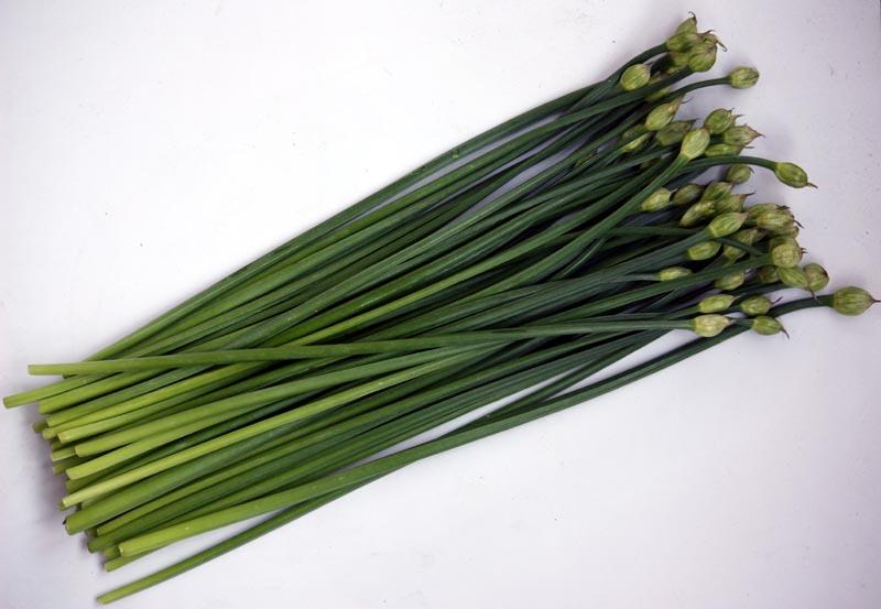 garlic chives 2