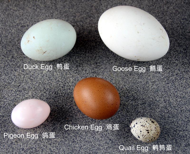 5 eggs