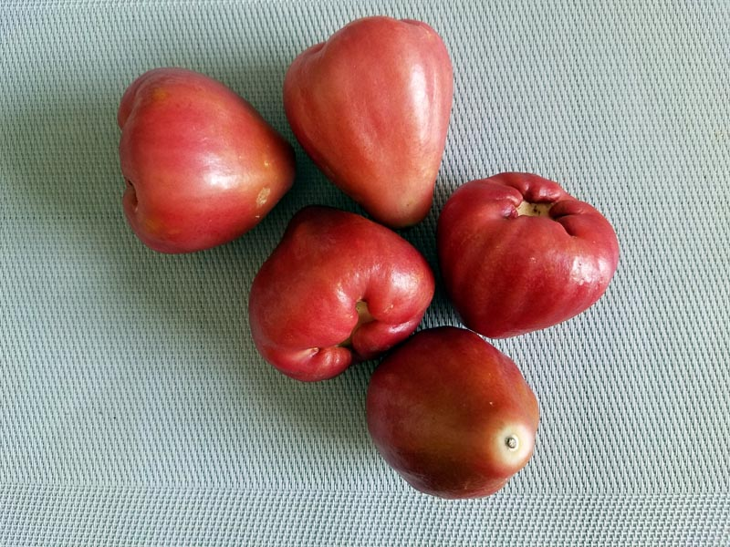 wax-apples1