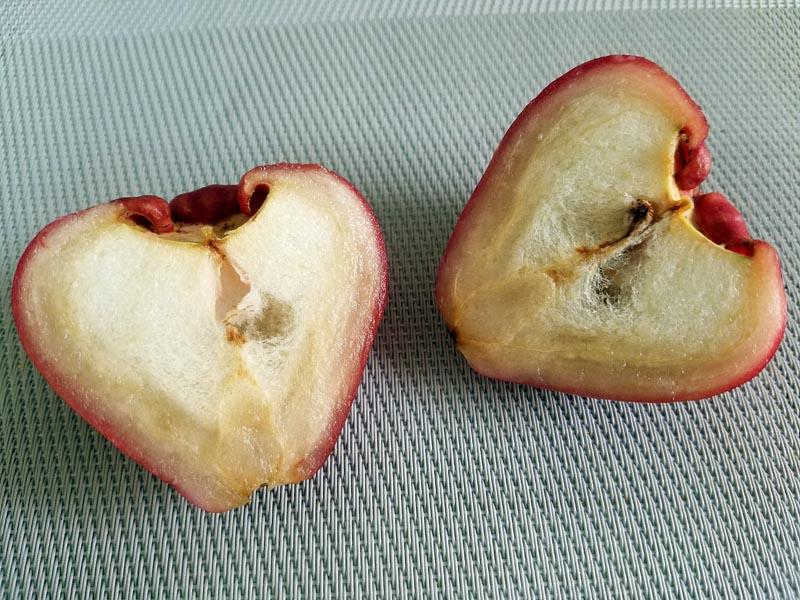 wax-apples2